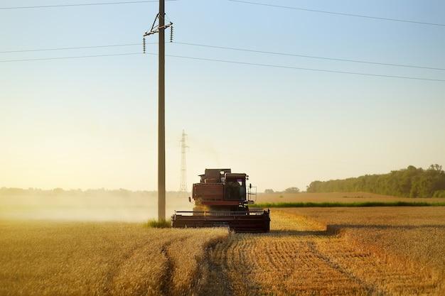 Combine a colheita de grãos em um campo de trigo dourado