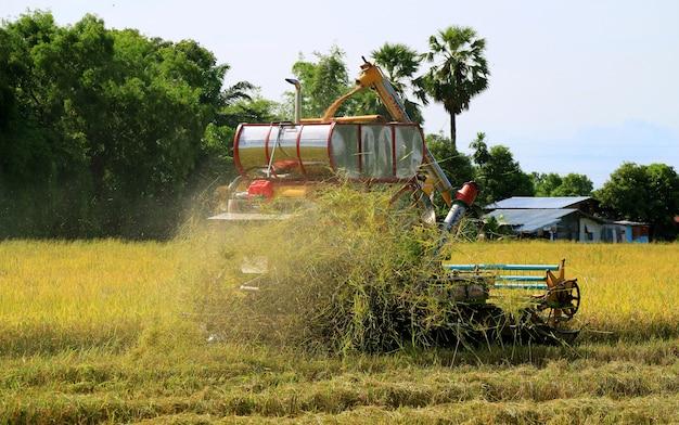 Combine a colheita de máquina no campo de arroz dourado, tailândia