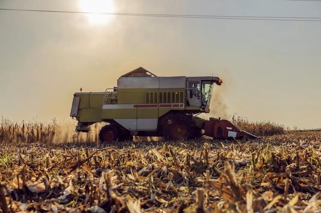 Combine a colheita de milho no campo em uma tarde ensolarada de outono. maquinário para agricultura, agricultura