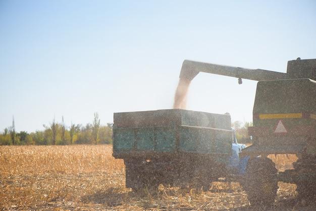 Combine a colheitadeira no campo de trigo no dia de outono.