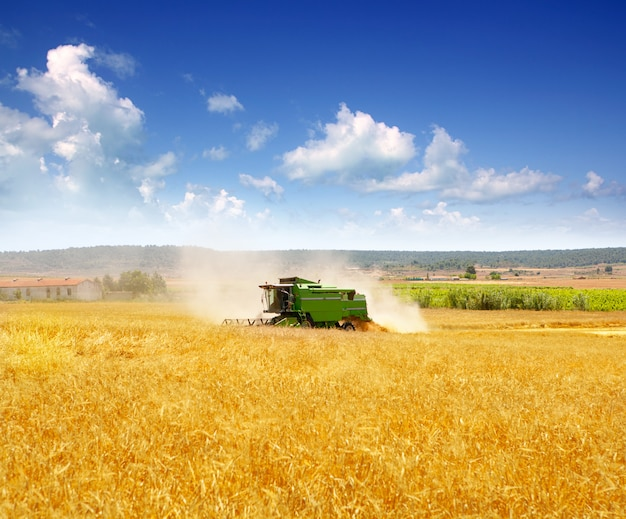 Combine harvester harvesting wheat cereal