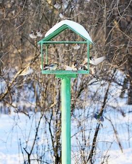 Comedouro para pássaros no inverno