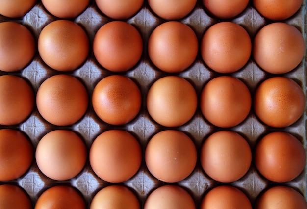 Comida de caixa de padrão de filas de ovos