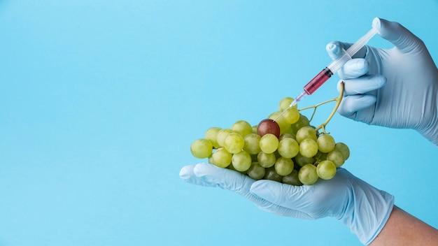 Comida deliciosa de uvas gmo modificada