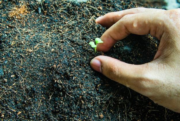 Como plantar o crescimento de mudas,