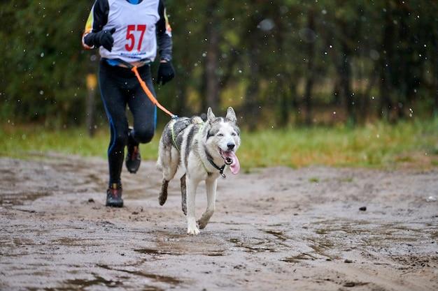 Competição canicross cão dport