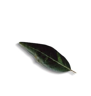 Complete as folhas verdes isoladas de vista em background.fit branco para seu elemento de design.