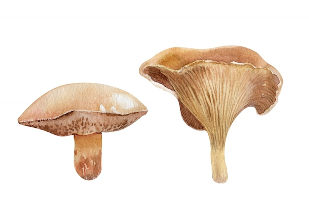 Composição aquarela com diferentes tipos de cogumelos