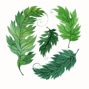 Composição aquarela com folhas verdes