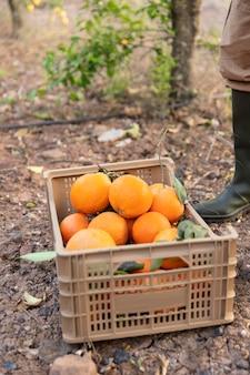 Composição com caixa cheia de laranjas