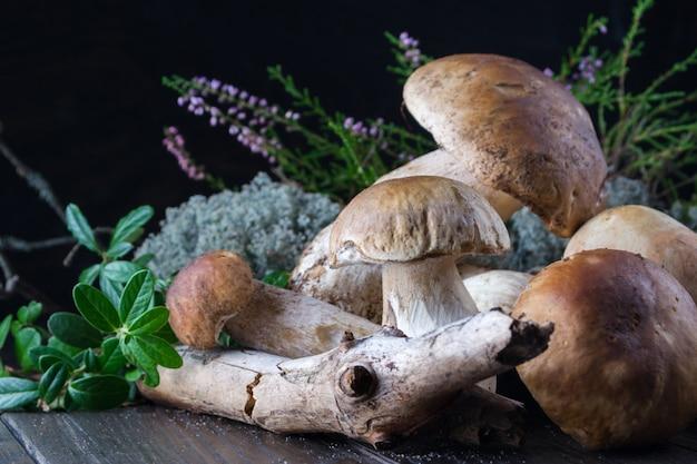 Composição com cogumelos porcini selvagens colhidos na mesa de madeira