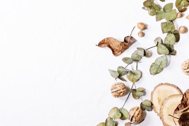 Composição com folhas de bordo amarelas, ramos de eucalipto e castanhas sobre um fundo branco. postura plana, copie o espaço