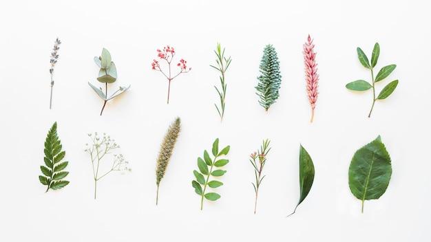 Composição com folhas diferentes