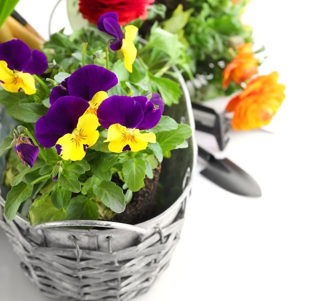 Composição com lindas plantas e ferramentas de jardinagem em branco