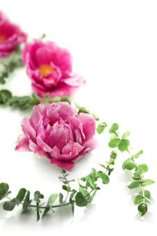 Composição com lindas tulipas e ramos na superfície branca