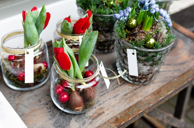 Composição da flor de natal em vasos de vidro. tulipas, buquê de geocintos com bolas de natal festivas no pote. decoração de flores para casa, loja de flores na europa. decoração de natal para férias de ano novo.