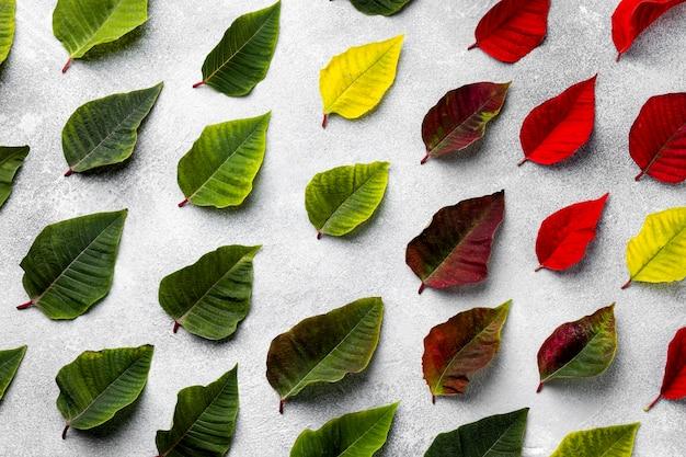 Composição da vista superior de folhas coloridas