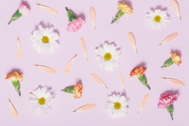 Composição das cabeças de flores e pétalas