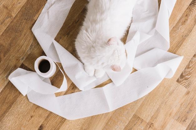 Composição de animais de estimação adorável com gato branco com sono