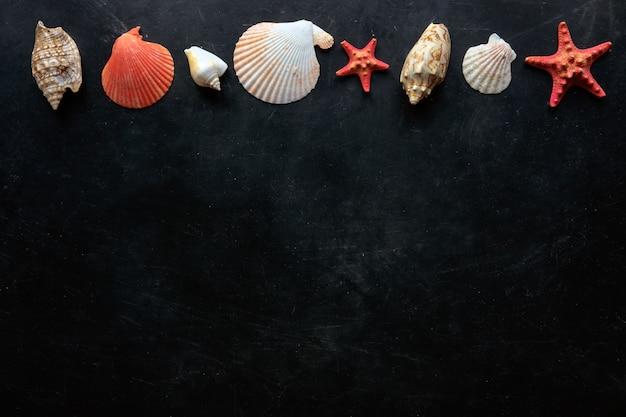 Composição de conchas do mar em fundo preto com espaço de cópia