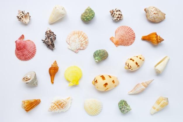 Composição de conchas do mar exóticas em branco