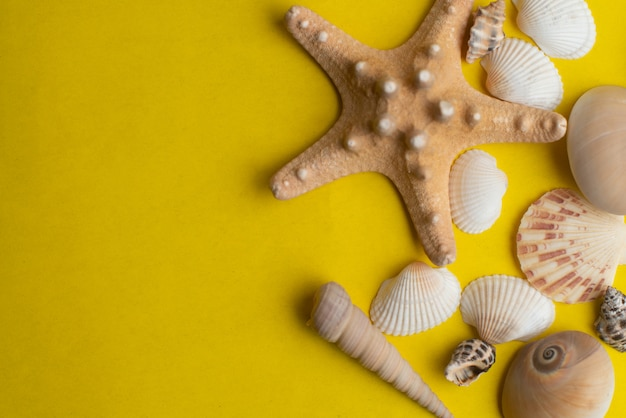 Composição de conchas do mar exótico. conceito de verão. vista do topo