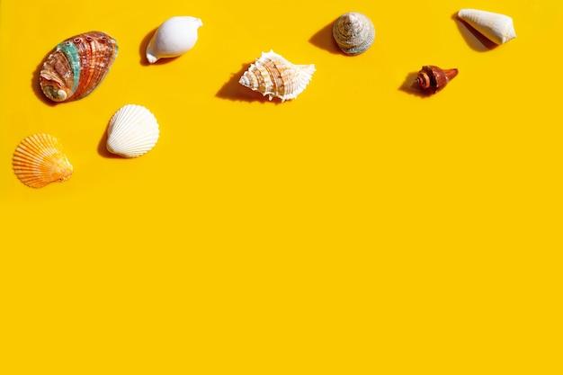 Composição de conchas exóticas em fundo amarelo.