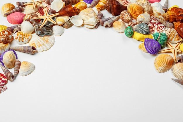 Composição de conchas exóticas