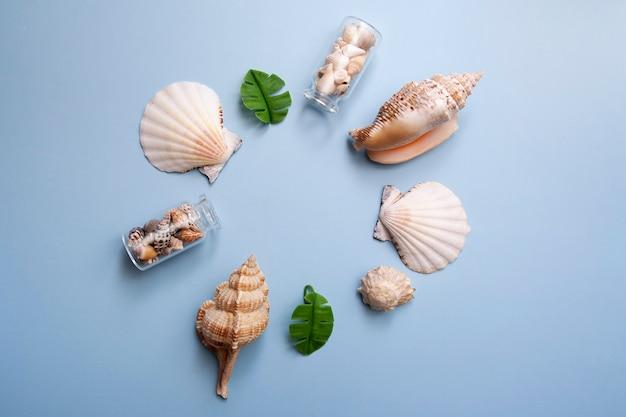 Composição de conchas sobre um fundo azul. quadro de verão. copie o espaço.