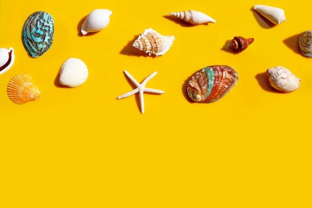 Composição de estrelas do mar e conchas do mar exóticas em fundo amarelo.