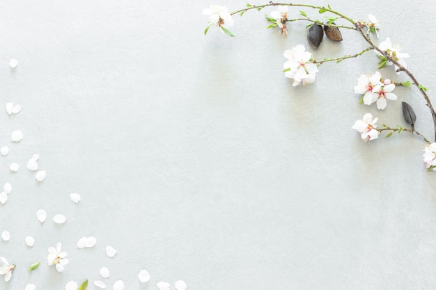 Composição de flores de amendoeira em fundo cinza