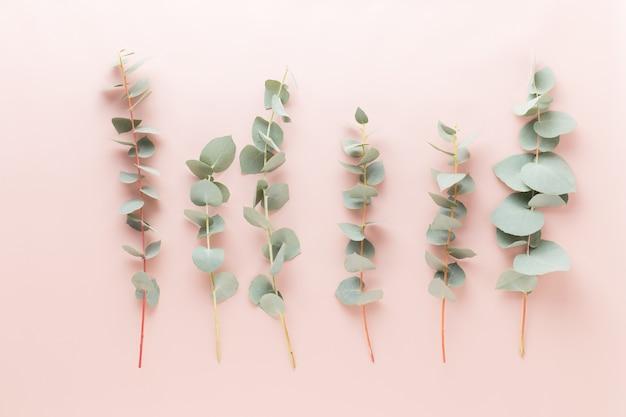 Composição de flores e eucaaliptus. padrão feito de várias flores coloridas em fundo branco. a vida ainda é plana.