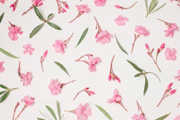 Composição de flores e plantas rosas bonitas