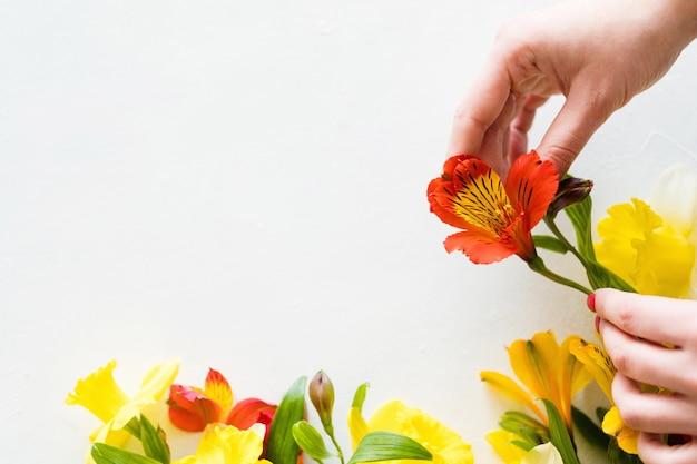 Composição de flores em fundo branco