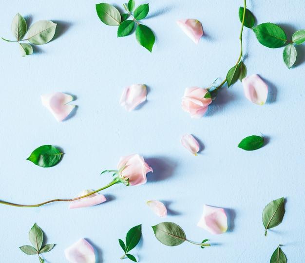 Composição de flores. flores da rosa do rosa no fundo azul. vista do topo.