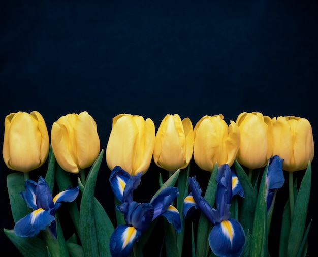 Composição de flores. moldura feita de tulipas amarelas e íris sobre fundo azul. dia dos namorados, dia das mães e conceito de dia das mulheres. camada plana, vista superior.
