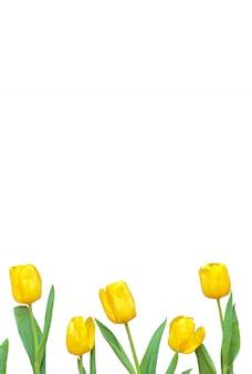 Composição de flores. moldura feita de tulipas amarelas sobre fundo branco. dia dos namorados, dia das mães e conceito de dia das mulheres. formato plano, vertical.