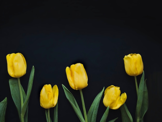 Composição de flores. moldura feita de tulipas amarelas sobre fundo preto. dia dos namorados, dia das mães e conceito de dia das mulheres. camada plana, vista superior.