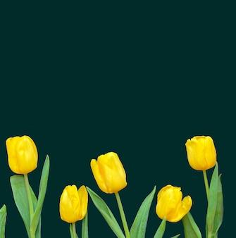 Composição de flores. moldura feita de tulipas amarelas sobre fundo verde. dia dos namorados, dia das mães e conceito de dia das mulheres. camada plana, vista superior.