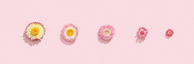 Composição de flores padrão de flores secas em uma superfície rosa suave