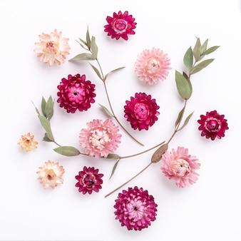Composição de flores. ramos de eucalipto e flores secas em fundo branco. quadrado - imagem