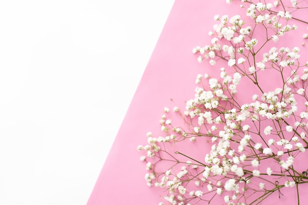 Composição de flores romântica. flores de gypsophila branco, molduras para fotos