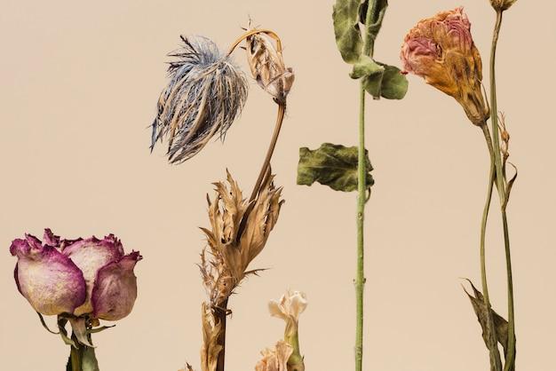 Composição de flores secas
