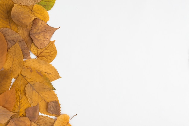 Composição de folhas amarelas murchas