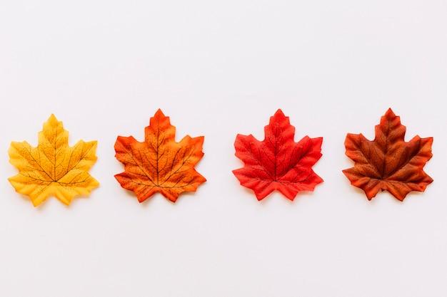 Composição de folhas de cor de outono