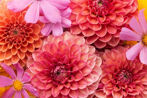 Composição de fundo de lindas flores