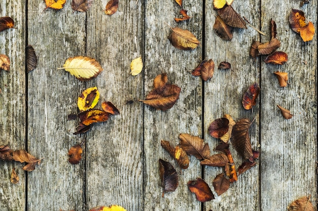 Composição de fundo de outono em fundo de madeira velho. outono, folhas de outono na placa do celeiro com fundo vintage de textura de madeira de musgo. copie o espaço, disposição plana, vista superior.