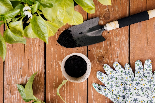 Composição de jardinagem vista superior