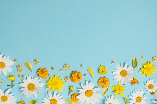 Composição de lindas flores brilhantes