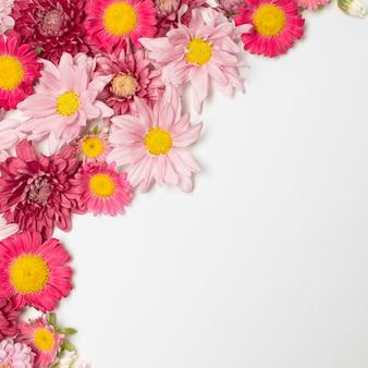 Composição de lindas flores rosas
